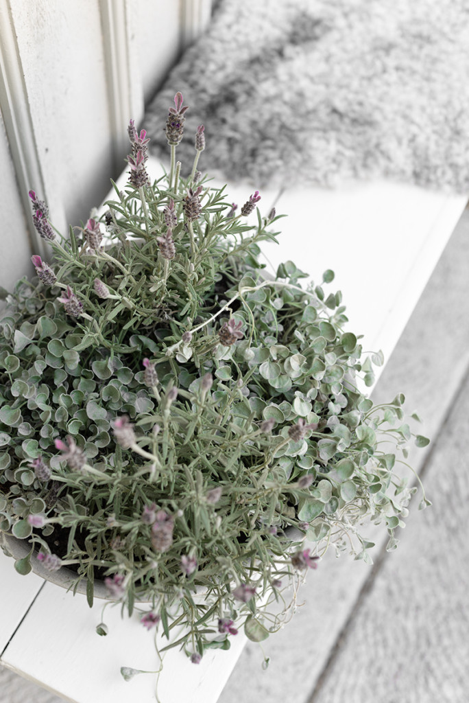 sommarplantering